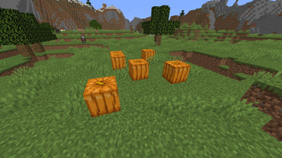 pumpkins spawned in a plains biome in Minecraft