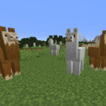 Three llamas standing together in Minecraft