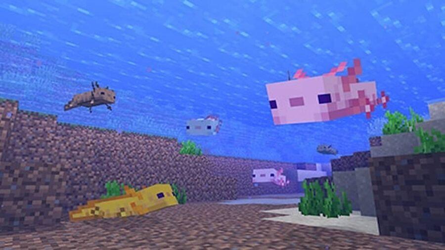 minecraft axolotl colors