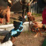 far cry 6 cockfight